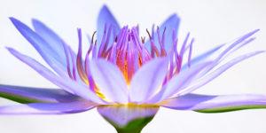 tcm_dam_orchid
